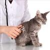 Ветеринарные клиники в Высокогорске